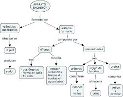 Sistema Circulatorio Mapa Conceptual Buscar Con Google Sistema Excretor Sistema Circulatorio Carteles Para Clase