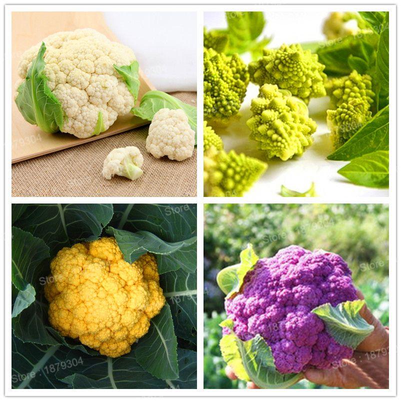 Seeds Purple Cauliflower Bonsai Healthy Vegetable Plant Home Garden 100pcs