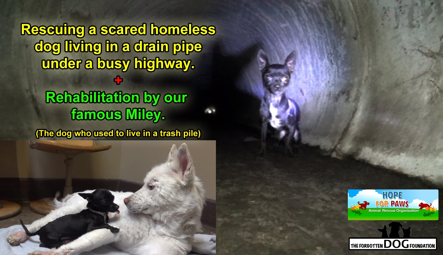 Rescuing a scared homeless dog living under a busy highway.