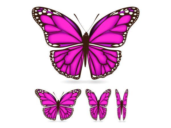 Butterfly Wing Pattern Keywords Beautiful Butterfly Wings