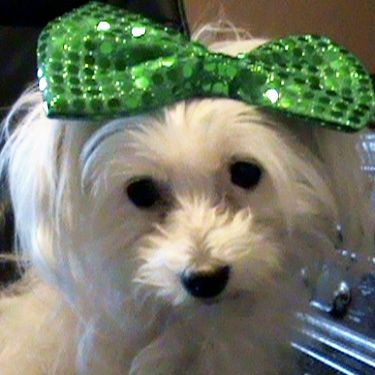 Bianca From Edmond Ok United States With Images Cute Dog
