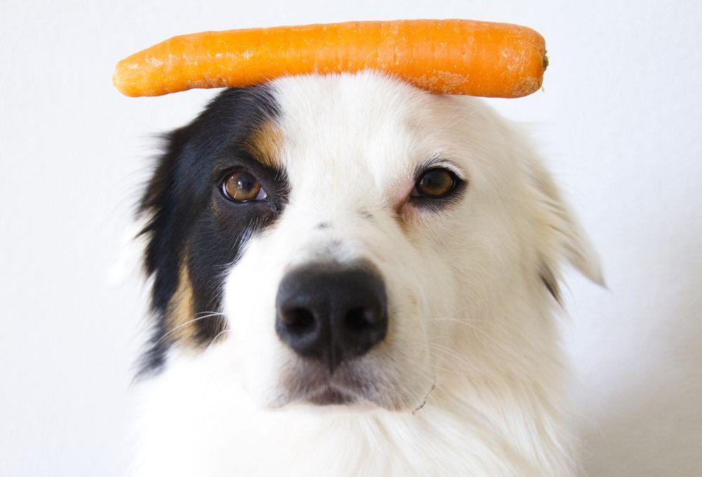 Home Dog Food Recipe