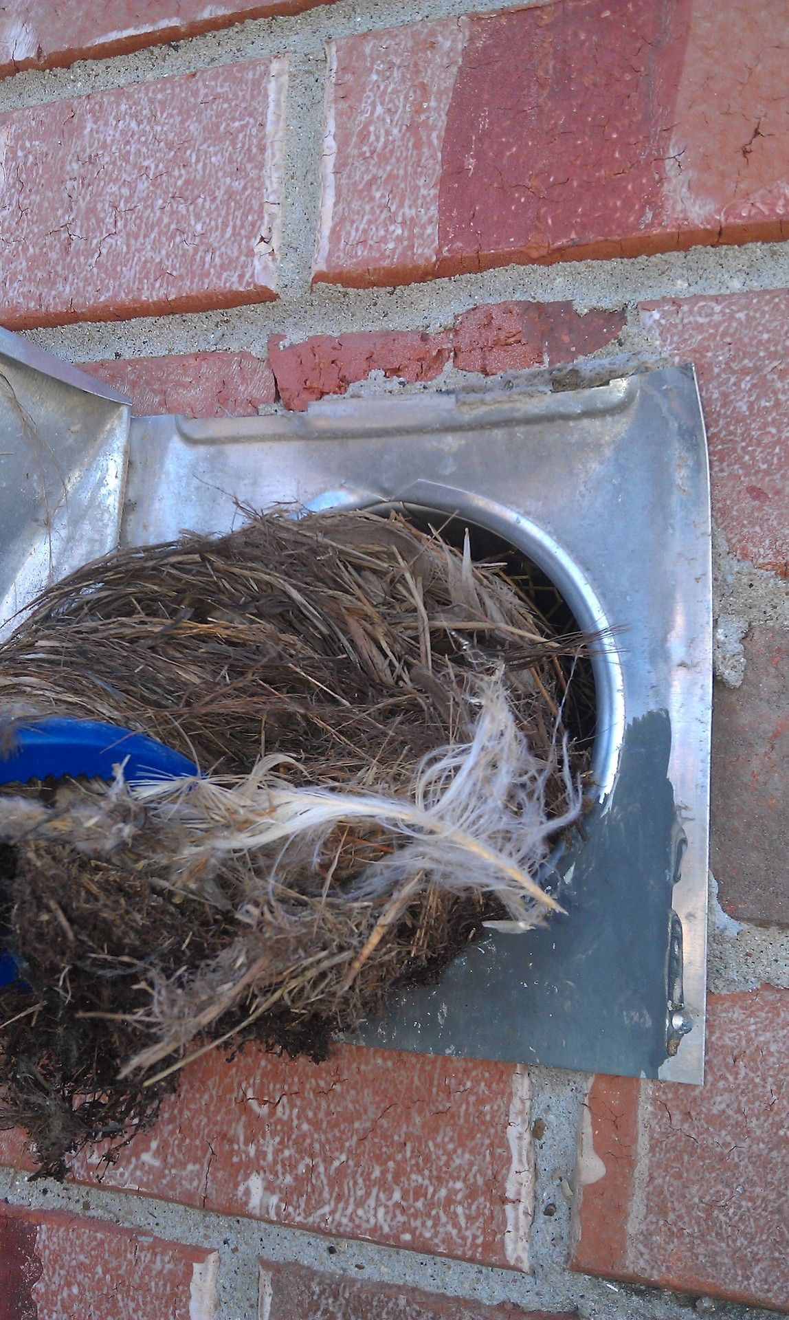 Birds build nests inside dryer vents and cause major