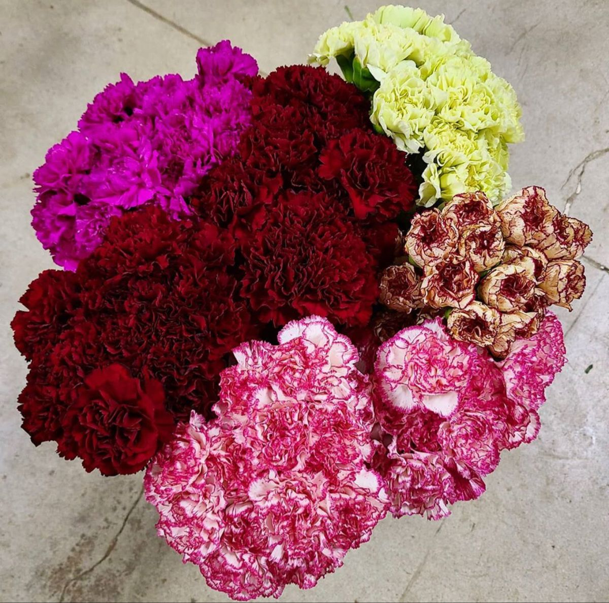 Carnation Flower In 2020 Carnation Flower Flowers For Sale Mini Carnations