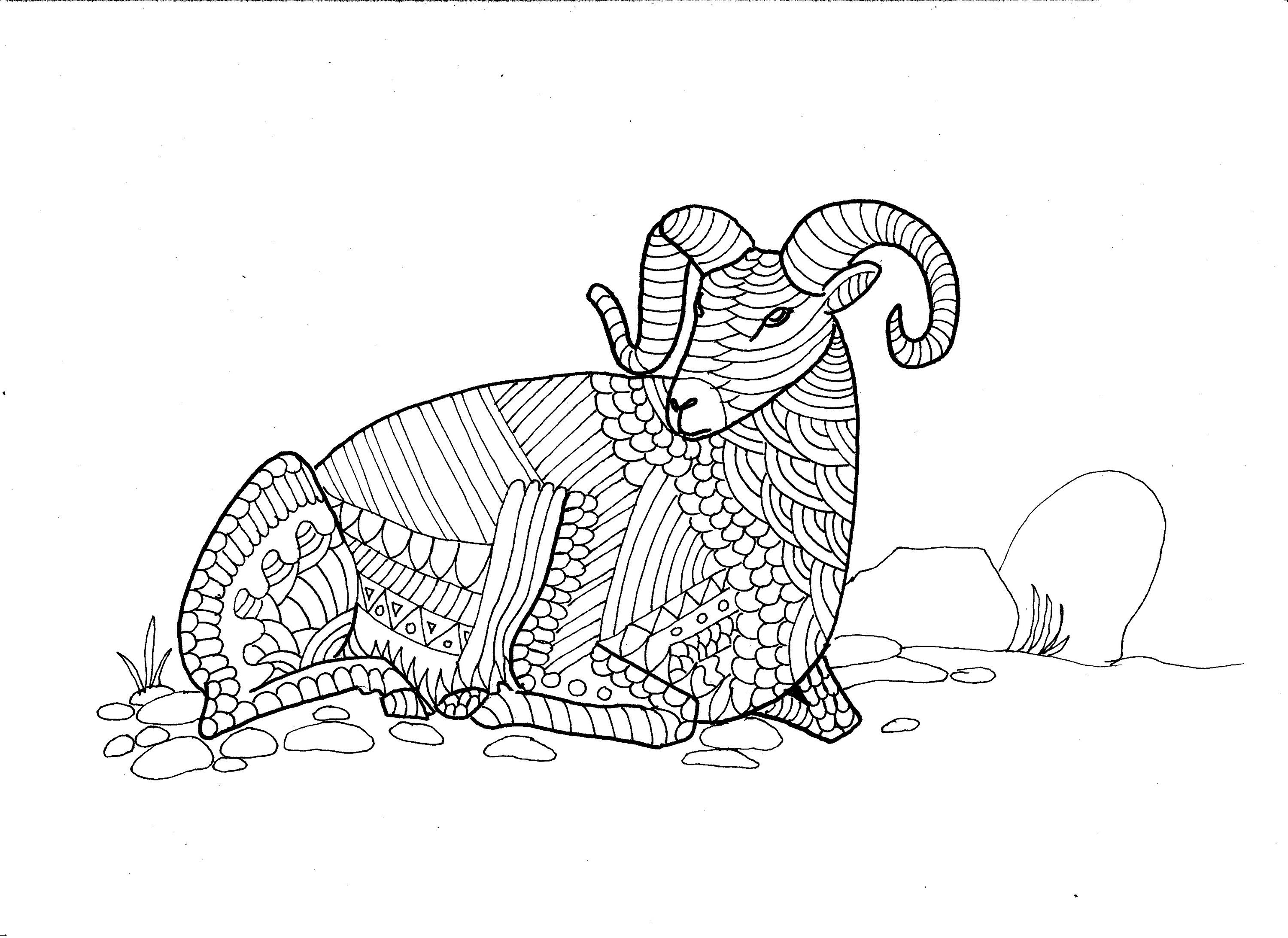 Bighorn Sheep Colouring Page Digital Product Digital Download