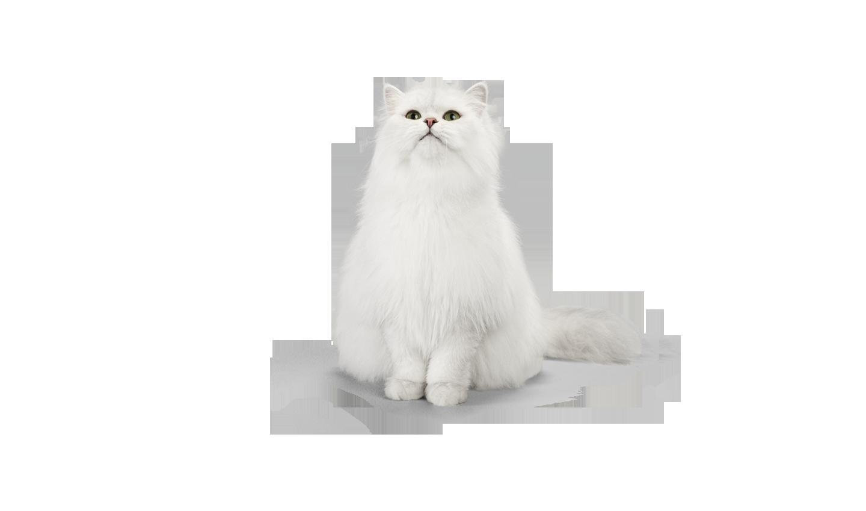 Fancy Feast Traditional Male Persian Cat Cat Food Brands Cats Cat Food