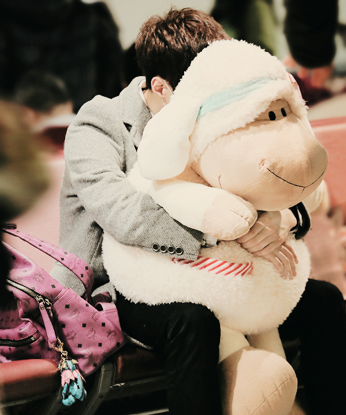9a5446d44d75 EXO Lay hiding behind his stuffed sheep baby ) At least I think it s a  sheep     It s okay