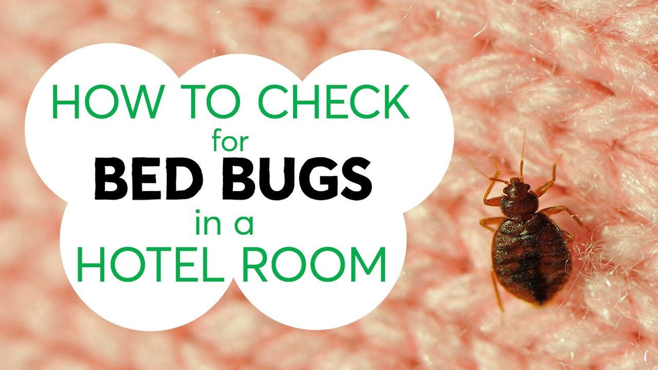 417744bd84245b4b91fea82981c7fe2d - How To Get Rid Of Bed Bugs While Backpacking