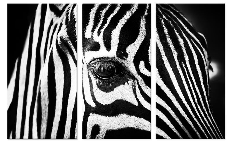 Drieluik foto schilderij zebra close up op canvas zwart wit foto drieluik foto schilderij zebra close up op canvas zwart wit altavistaventures Images
