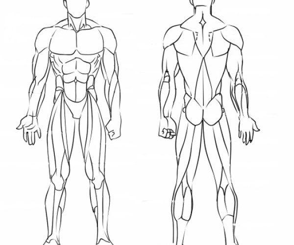 ¿Cómo dibujar los músculos? (Manga) | Desenhos corpo