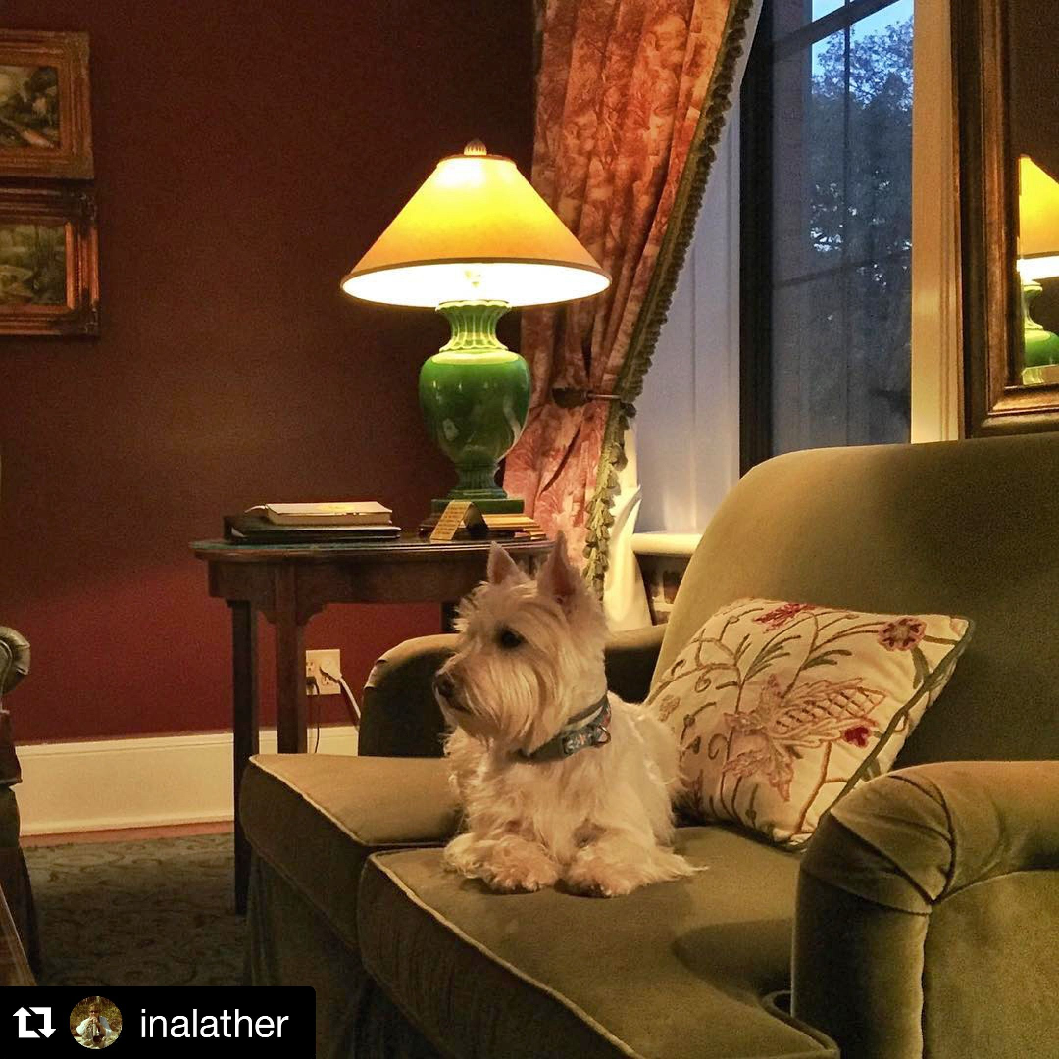 Pet Friendly At East Bay Inn We Re Just Admiring The Cuteness Of This Adorable Guest At East Bay Inn Ebipets Savannah Hotels East Bay Pets