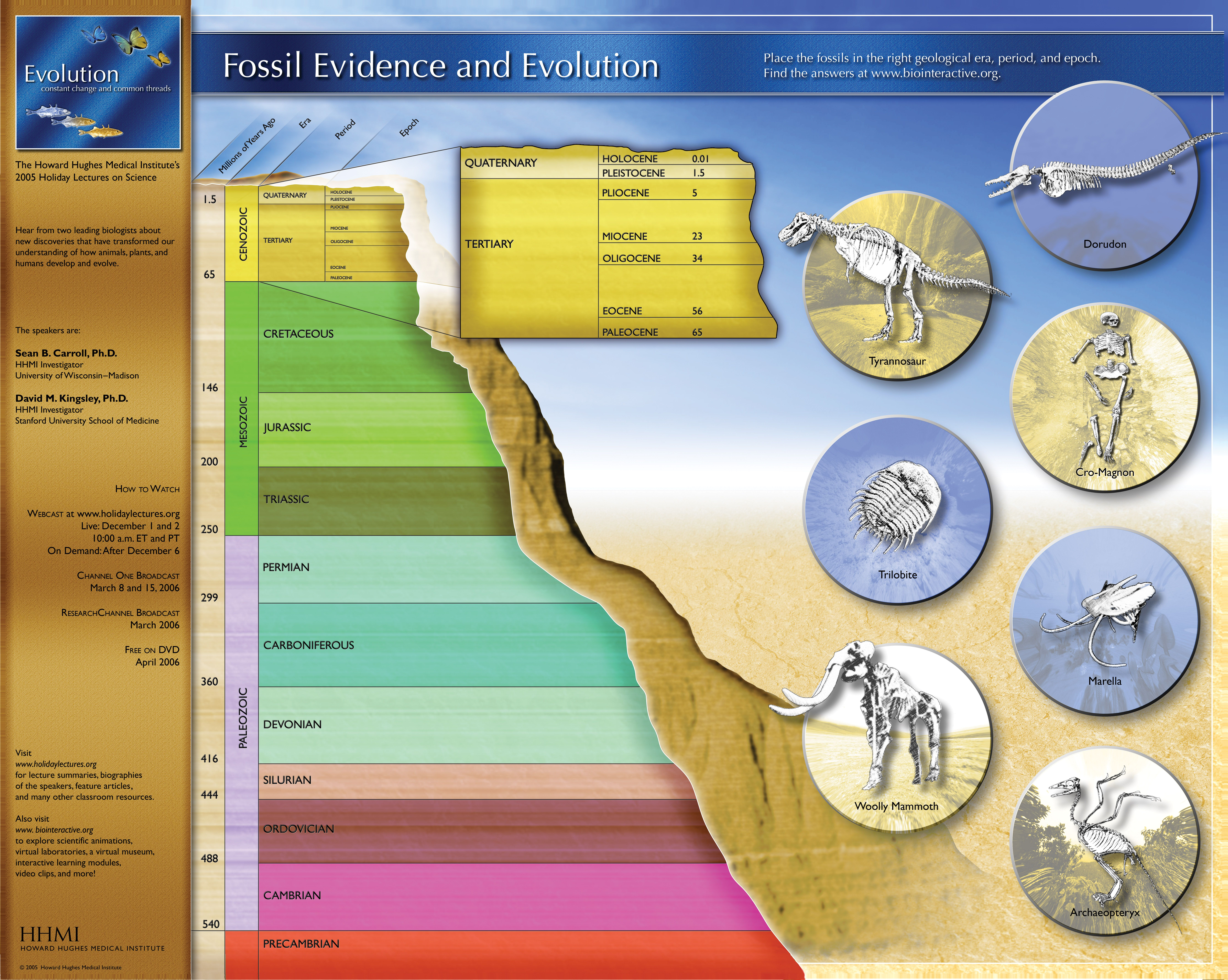 Fossil Evidence And Evolution Poster Graphic
