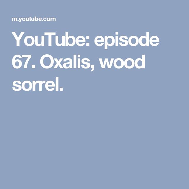 YouTube: episode 67. Oxalis, wood sorrel.