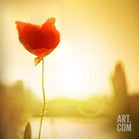 Single Poppy in the Sunset Photographic Print by Ilina S at Art.com