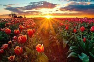 Solstício marca a chegada do verão no Hemisfério Sul neste sábado às 14h11min Astrônomo explica momento em que acontece a menor sombra do ano no trópico.Sol incide com mais intensidade no Hemisfério Sul, marcando a chegada da estação.Ao mesmo tempo que o universo é grandioso,