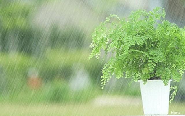 د م شقي اله و ى ღ On Twitter Creative Pictures Rain Graphic Design Posters