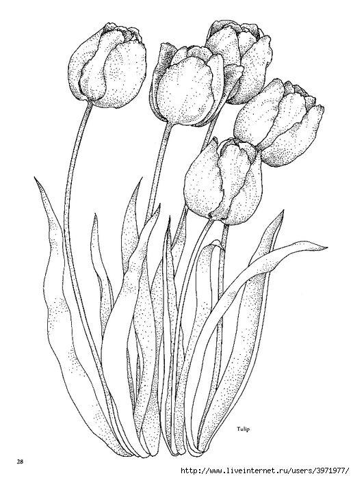 Kleurplaten Bloemen En Planten.Tulpen Digi S Bloemen Planten Kleurplaten Bloemen