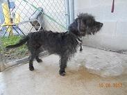 Adopt Kennel 22 On Petfinder Dog Kennel Dog Adoption Adoption