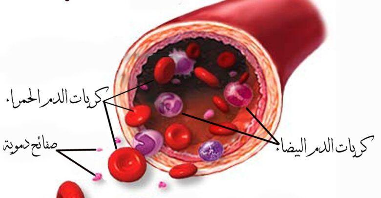 ماهي مكونات الدم ووظائفها وماهي فصائل الدم Push Pin