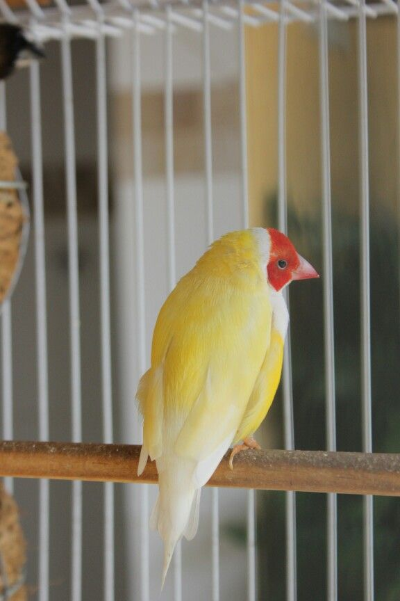 Passarinho / Bird