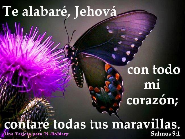 Bible│Versículos - #Versiculos - #Bible - #Dios
