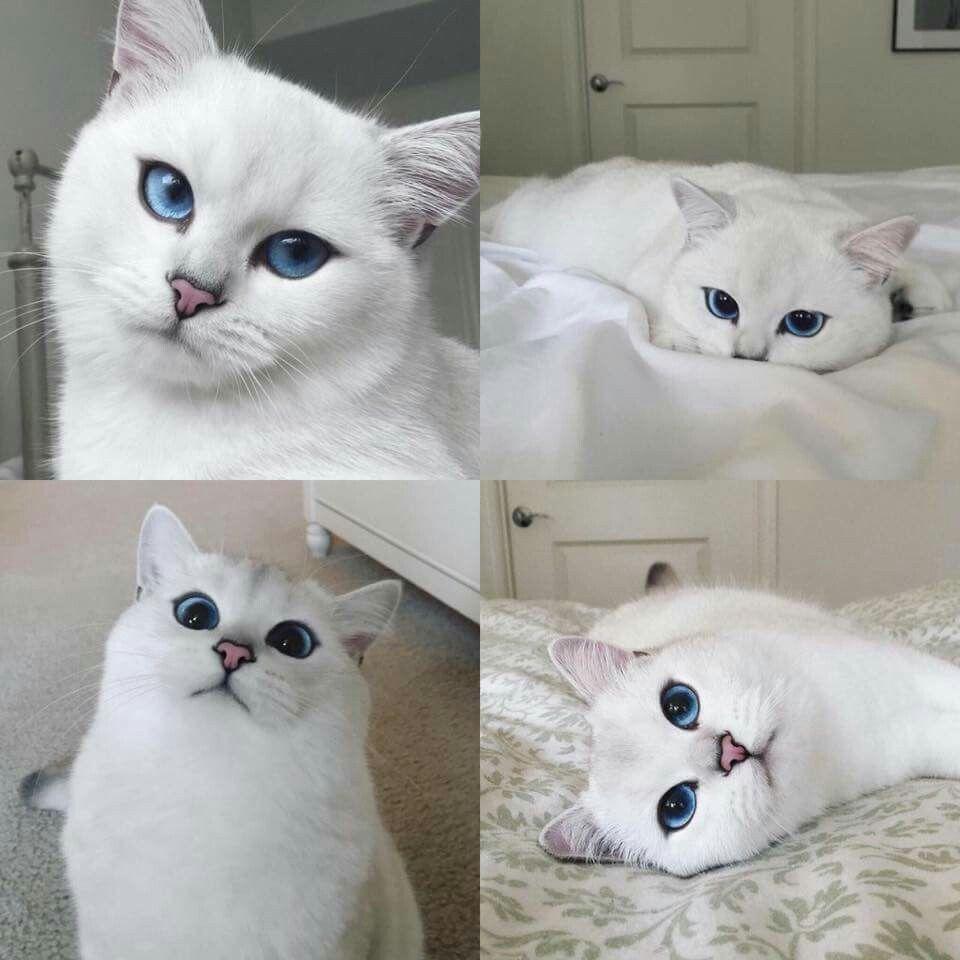 White cat is pretty □●○