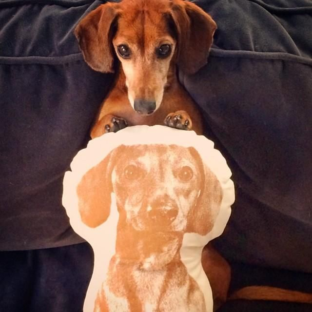 Pin On All About Dachshunds Doxies Teckel Dackel