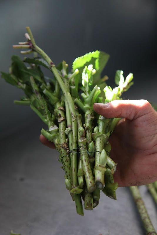 esquejes de hortensia para reproduccion