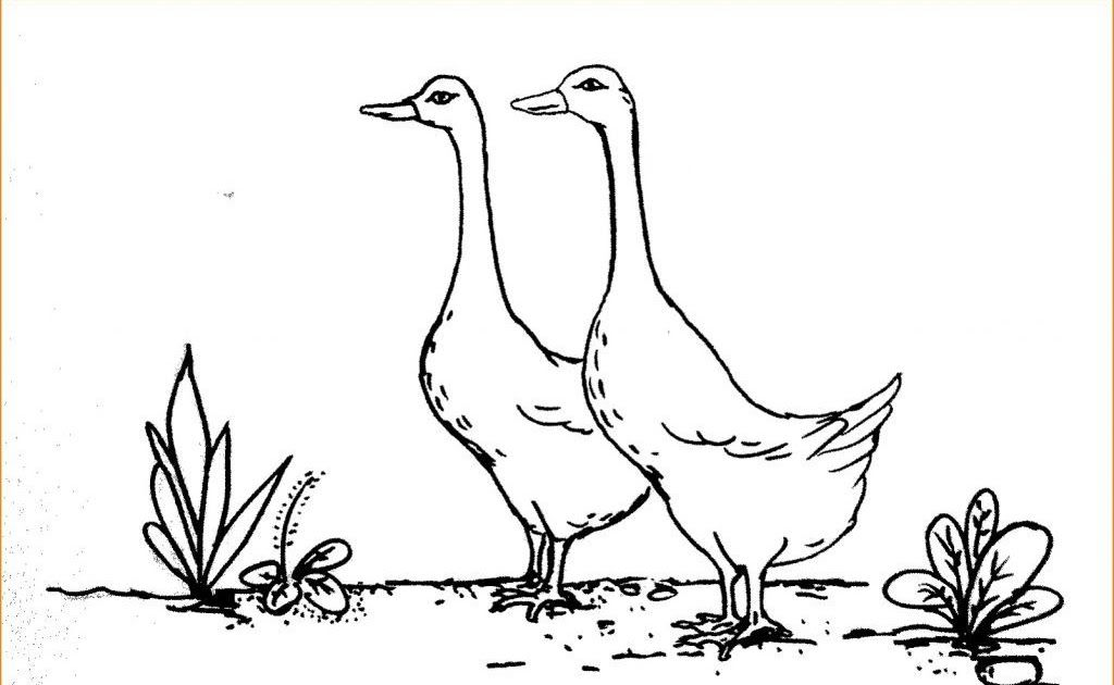 Fantastis 30 Gambar Haiwan Kartun Hitam Putih Link Download Bermacam Contoh Gambar Singa Untuk Mewarna Download Gambar Lucu Kartun H Di 2020 Hewan Binatang Kartun