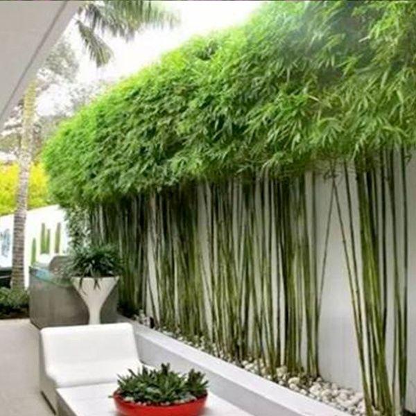 Photo of 100 Pcs / bag Bamboo Seeds Fashion Chinese Tree Seeds Green Plants | Wish