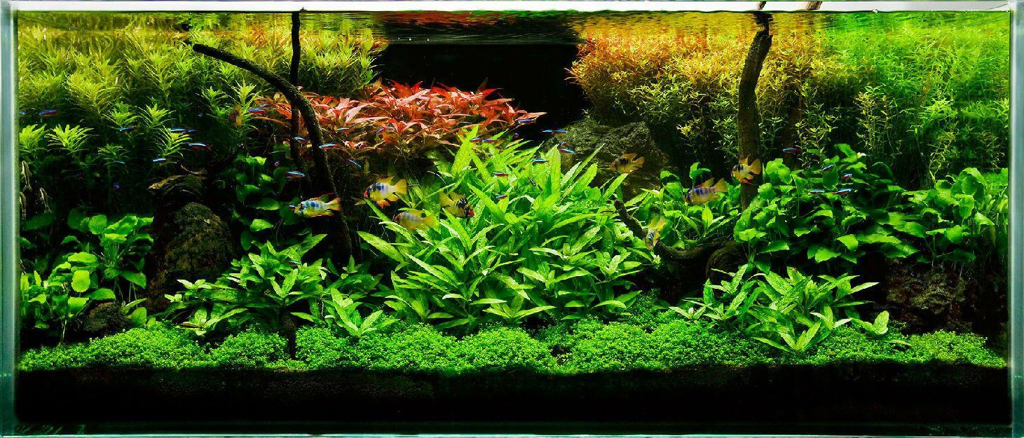 High Resolution Image: Home Design Ideas Aquascaping | Aquascaping ...