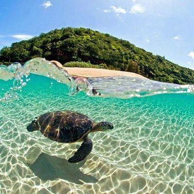 tortuga, reflejo del agua