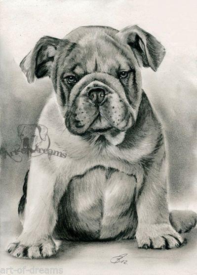 Old English Bulldog Englische Bulldogge Puppy O E Print Kunstdruck Art By Aod By A Brunner Englische Bulldogge Kunstdruck Bulldogge