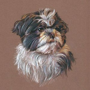 Coloured Pencil Drawing Brown Dogs Eyes