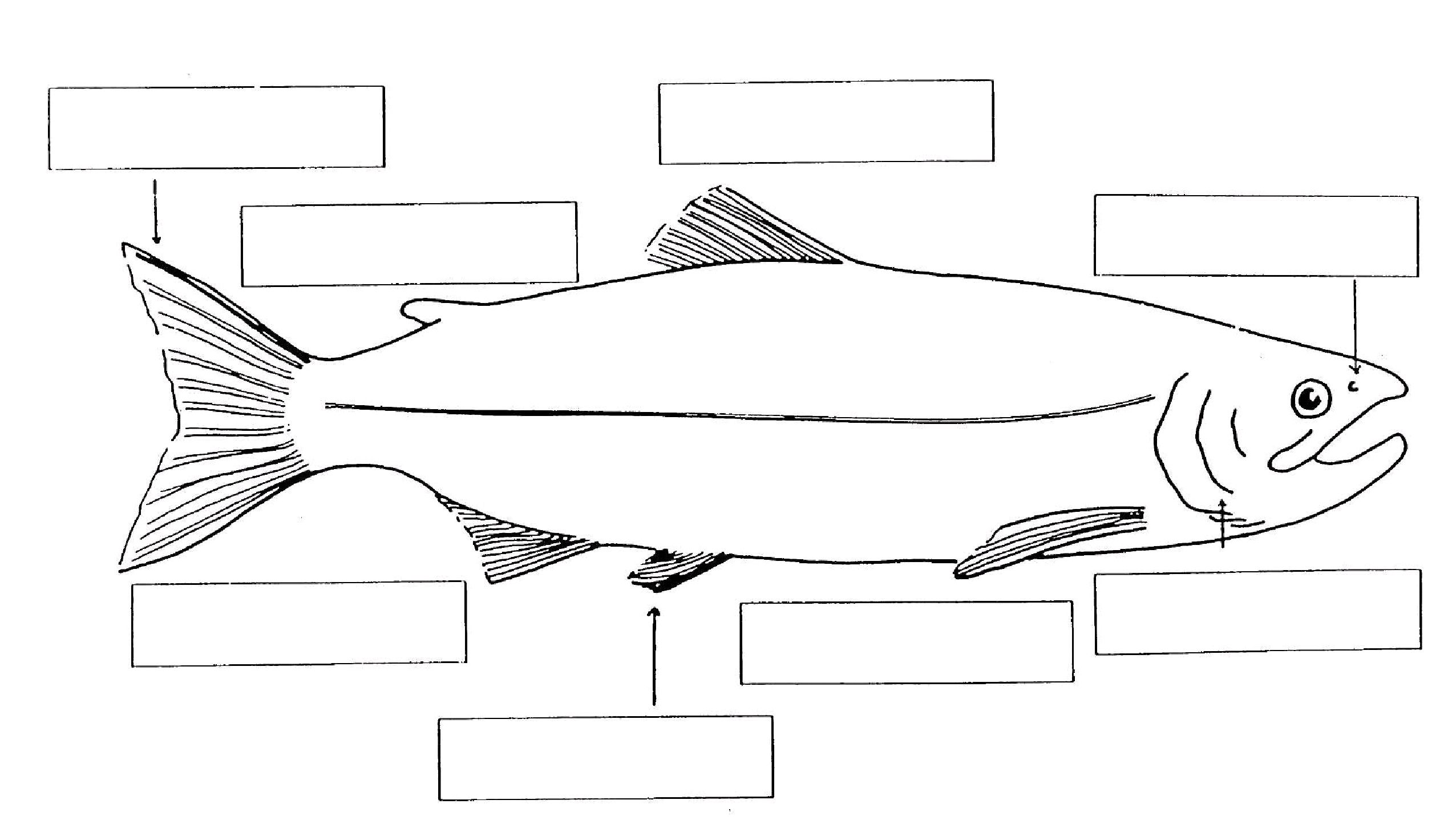 Worksheets Labeling Of Of A Fish Body fish anatomy worksheet imatei 1000 images about science amphibians reptiles and on
