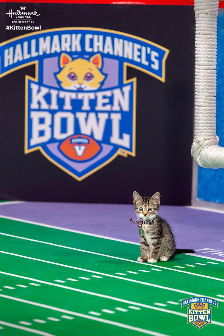 Hey Guys I M Open The Cat Letes Return For Kitten Bowl V On February 4 At 12 11c Only On Hallmark Channel Kittenbowl Kitten Bowls Kittens Cutest Kitten