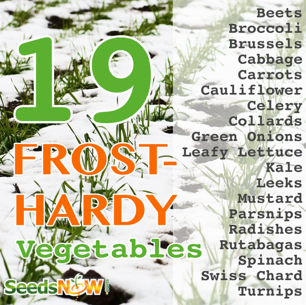 19 Frost Hardy Vegetables To Plant This Fall Growing 400 x 300