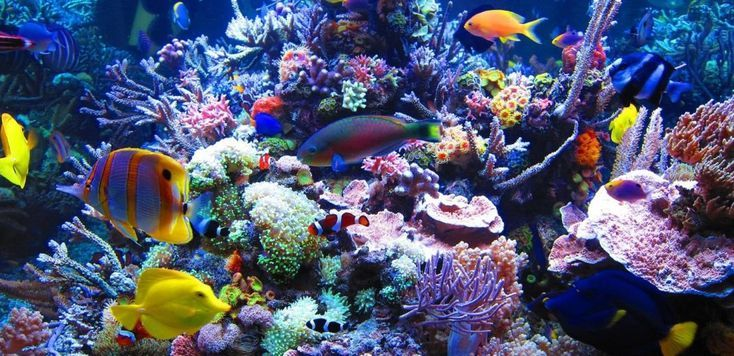 Image result for Best saltwater coral for your reef tank.