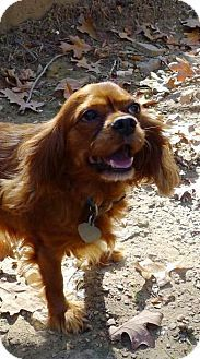 Puppy Mill Survivors Ruby Jasmine Need A Home Together Can You