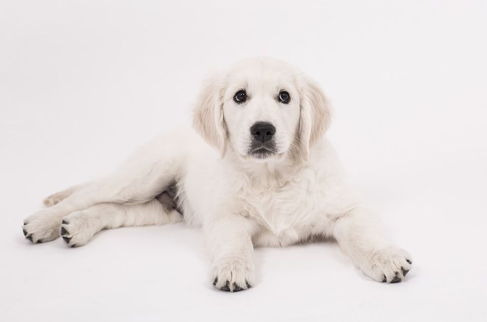 The Pros And Cons Of Owning A Blind Dog Dogs Dog Love Dogs