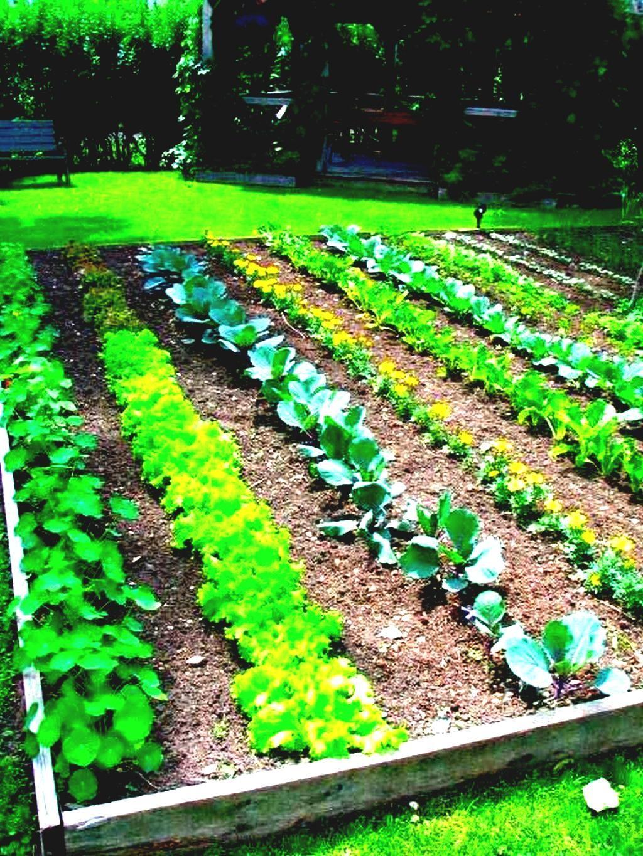 55 Cute Garden Ideas Bloxburg Bloxburg Garden Ideas Vegetable Garden Planner Garden Layout Vegetable Vegetable Garden Planning
