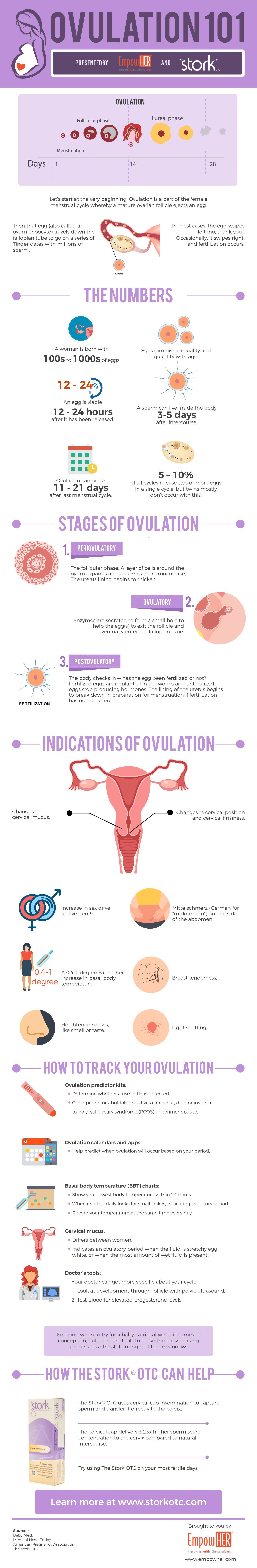 timeline of conception implantation picture VERY cool