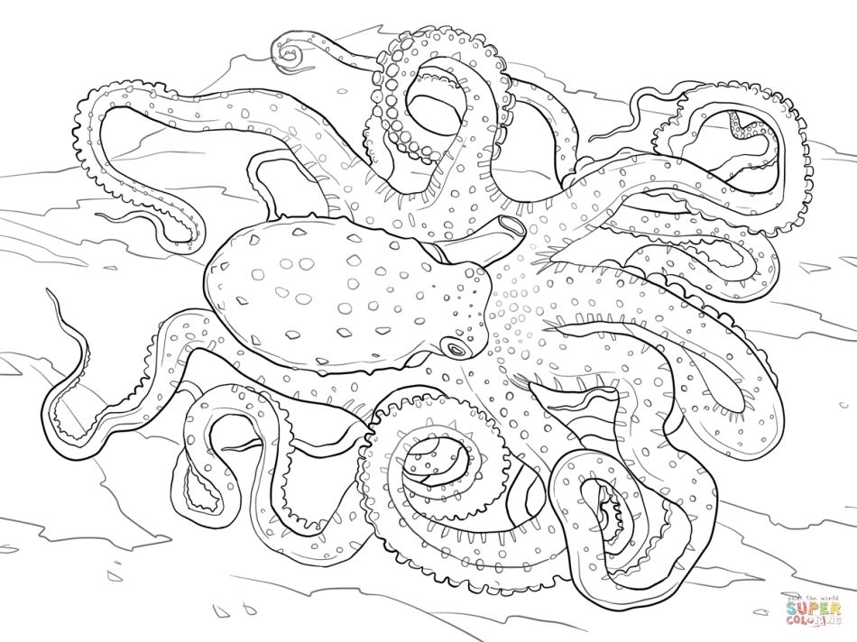Realistic Detailed Atlantic White Spotted Octopus Hard Coloring Pages For Adults Letscolorit Com Octopus Coloring Page Coloring Pages Beach Coloring Pages