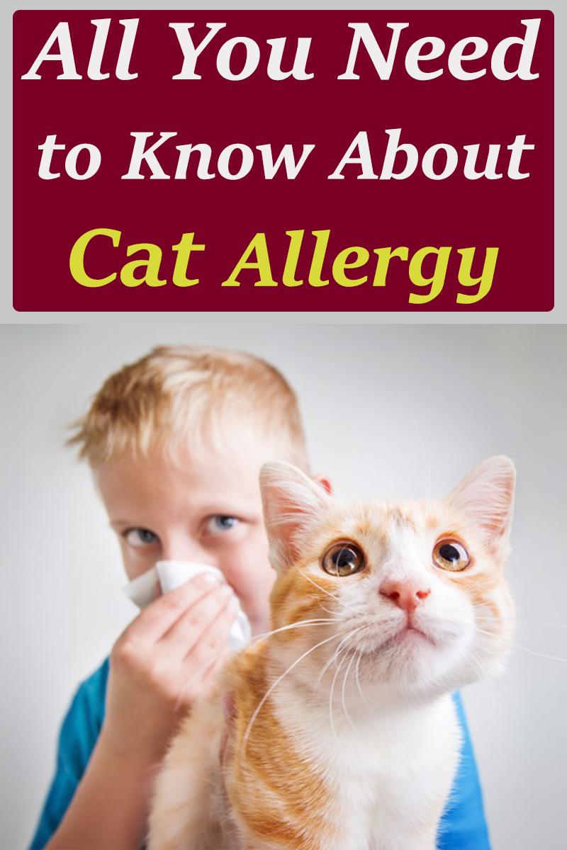 Cat Allergy Cat Allergies Cats Cat Health Care