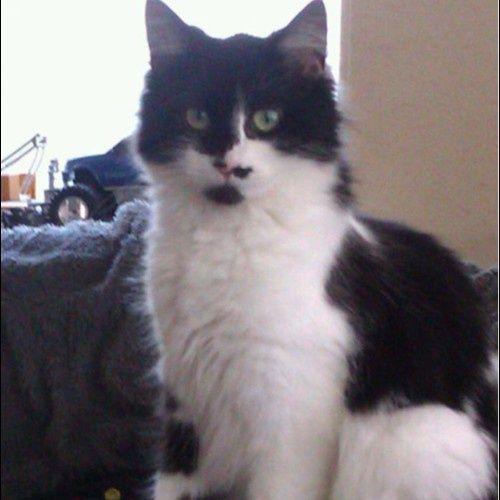 Yosh van Dam  met ailish - pretty cat!