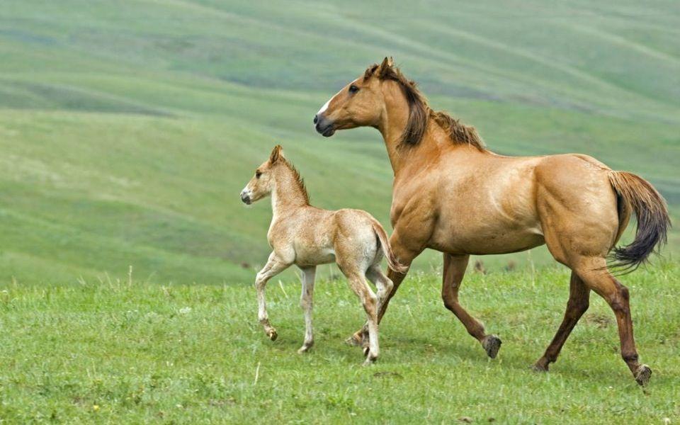 galoper sur un cheval sauvage le reve | mignon | Pinterest ...