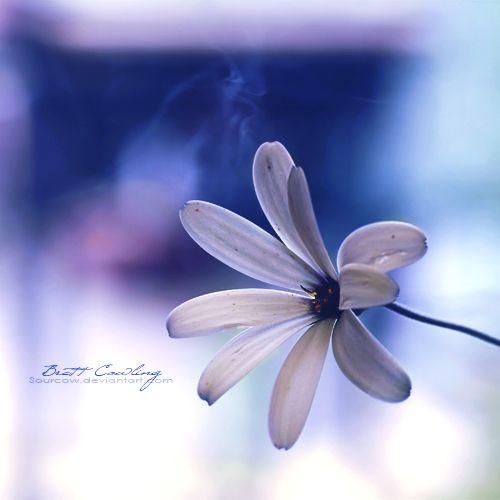 Little Flower... by sourcow.deviantart.com on @deviantART