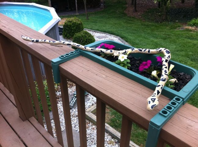 Python snake I painted from a branch that fell from a tree in our woods.