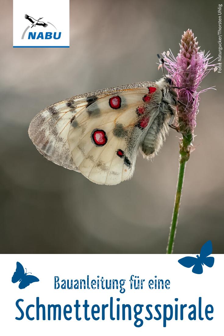 Tipp Schmetterlingsspirale anlegen   NABU   Bienenfreundlicher ...