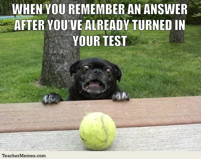 Student Memes Funny Animals Funny Dogs Dog Memes